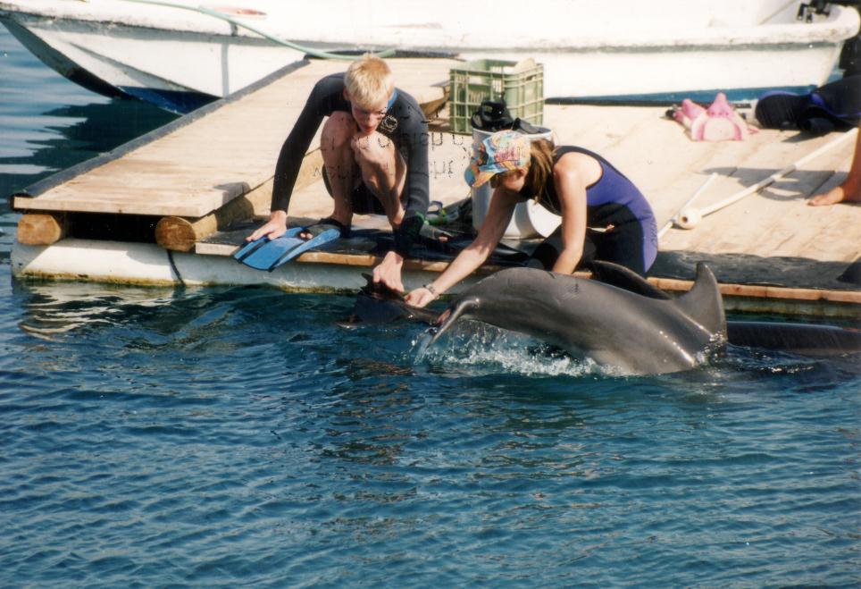 Therapie auf der Plattform. Delphine streicheln