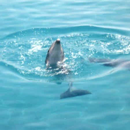 Ringelreihen im Wasser
